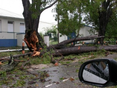 Tree damage after Tomas.
