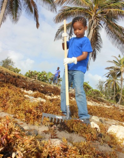 With gloves and rake, and a determination to be rid of the seaweed.