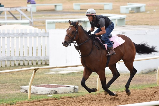 Mario Pinto taking War Envoy on a training run today.