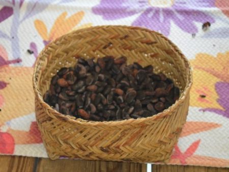 A basket of cocoa beans.