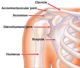 shoulderXbones