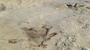 A series of dinosaur footprints uncovered on a Western Australian beach.