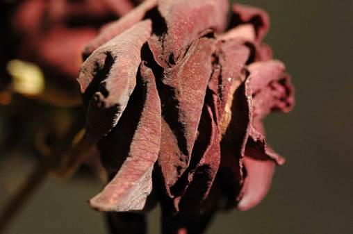 Schönheit und Trauer 8