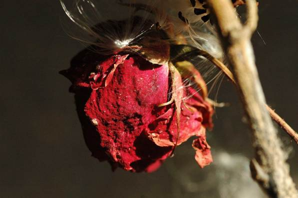 Schönheit und Trauer 9