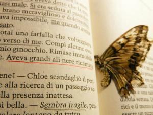 Foto di Ilaria Palumbo farfalla