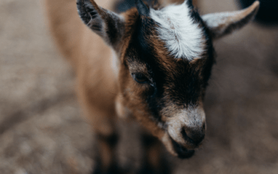 How a Goat and an Open Door Taught Me a Spiritual Truth