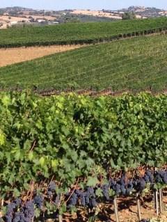Private wine tours organized by Barbara Lessona Countess Concierge