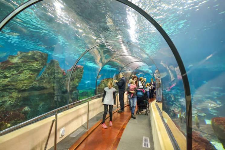 Bezoek met kinderen het aquarium in Barcelona