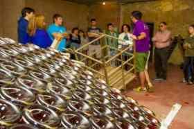 Heel veel wijnflessen