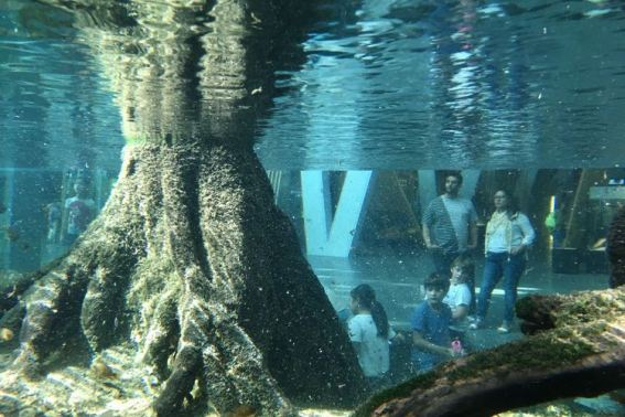 Aquarium in CosmoCaixa