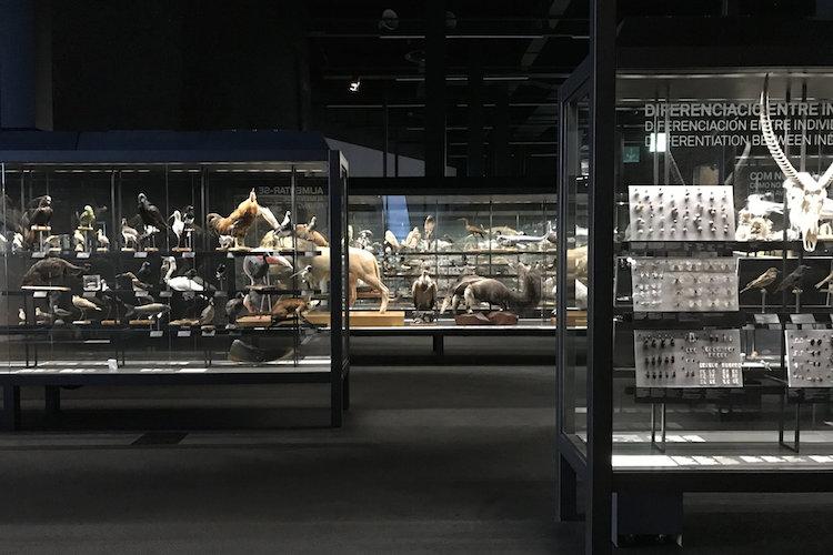 Museu Blau Barcelona met kinderen
