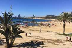 Strand palmbomen