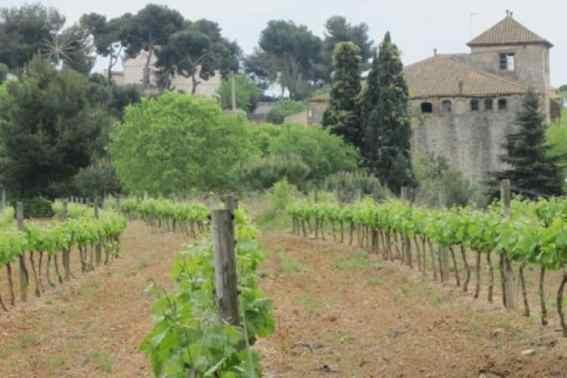Wijngaarden met klooster