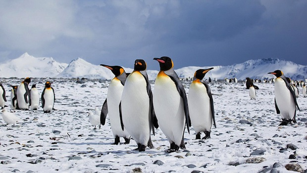 penguin small group- by antarctica bound on flickr