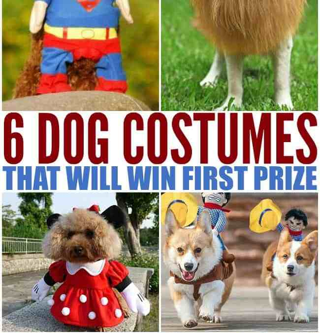 Adorable Dog Costumes for Halloween