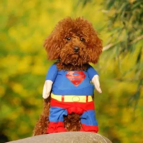 superdog superman dog costume