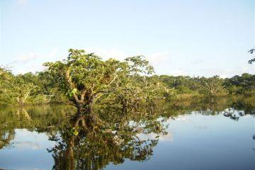jungle amazon tour ecuador