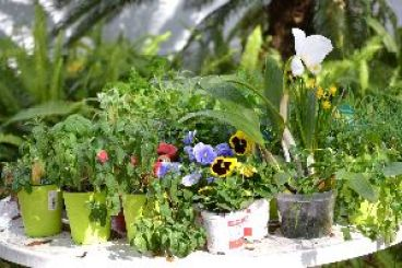 I am ready to start planting_small