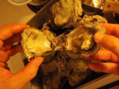 opening the oysters_small