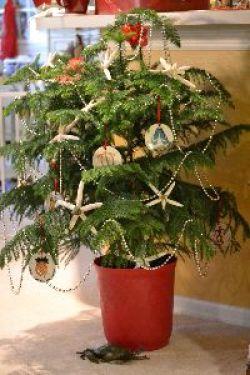 tree option_small
