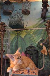 Hermiones cat_small