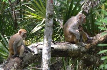 my beautiful monkey family_small