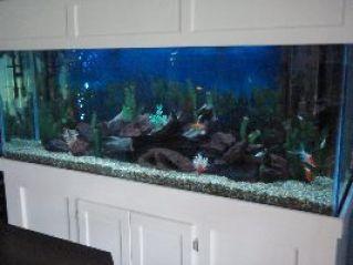 Brians fish tank_small