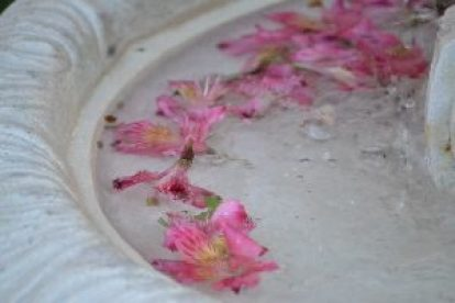 fountain-flowers-2_small