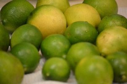 our-key-limes-from-our-tree_small