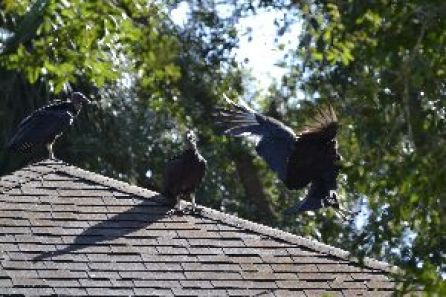 3 of them on Mary Pats roof_small