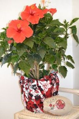 Hibiscus in Boxer shorts_small