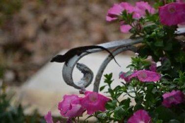 i love our backyard lizards_small