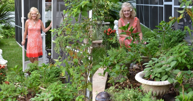 Julie's New Herb Garden