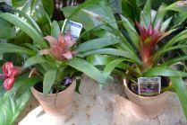 Beautiful_tropical_plantings._small