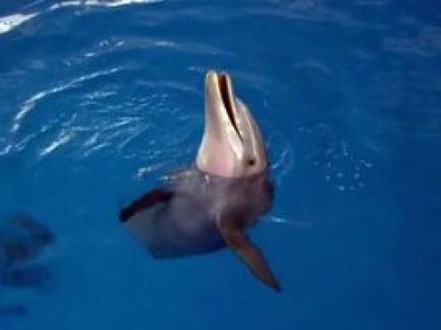 -Winter-dolphin_tale_small