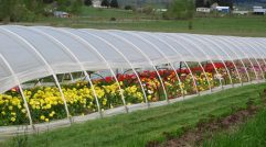 Springtime Hoophouse
