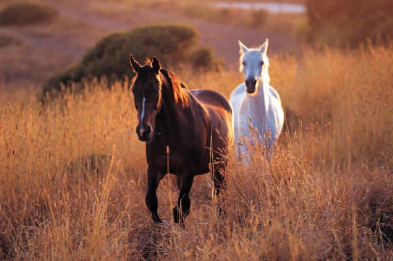 2_horses