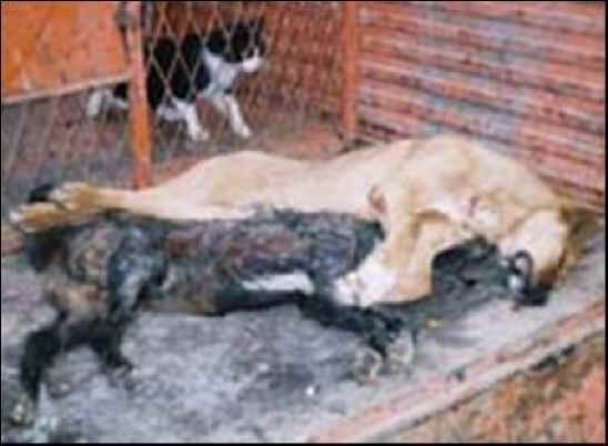 dog-cruelty-08