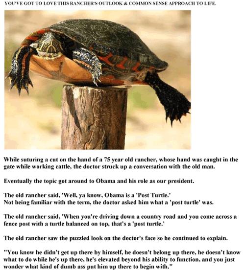 Post-Turtle-Web
