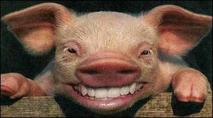 Pigsheaddunoed-vi