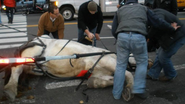 ht_horse_Carriage_collapse_fb_thg_111205_wg