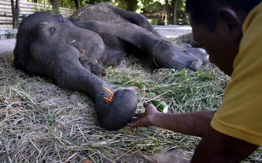 elephant_2166440k