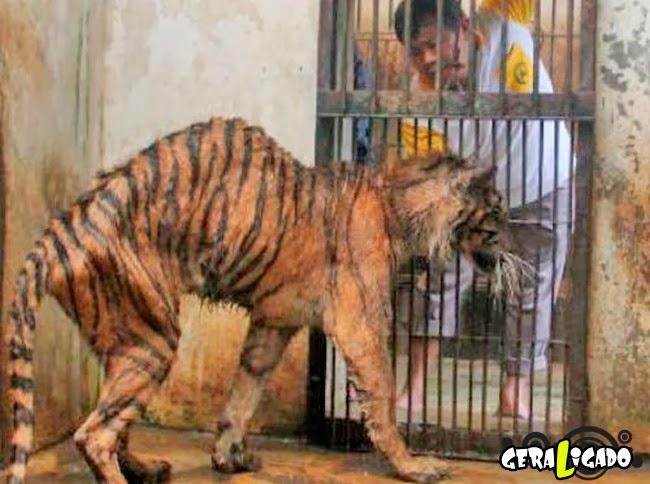 killer_zoo_10