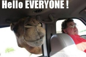 funny-camel-greeting-everyone-445x2991