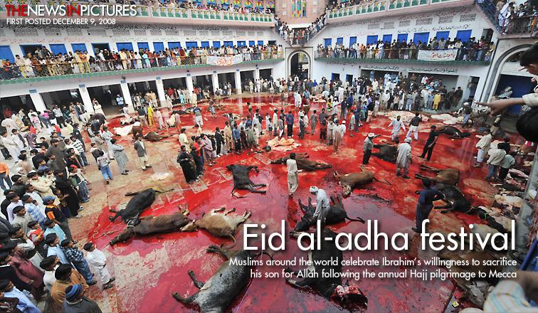 Muslim animal sacrifice and barbaric blood-letting festival of Eid