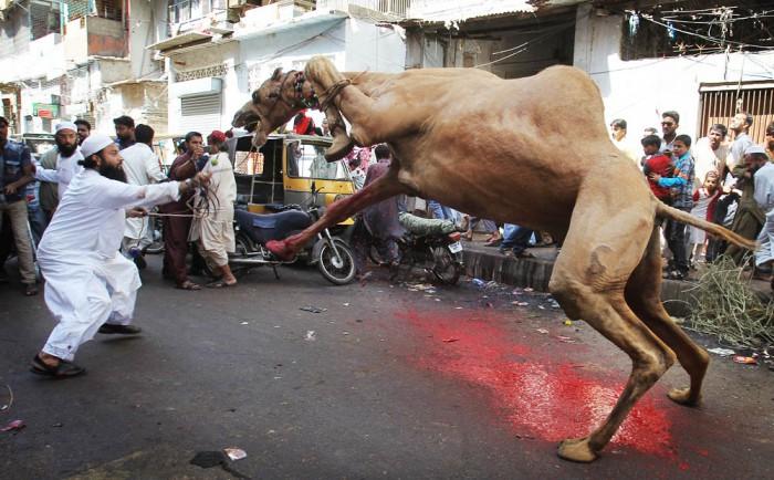 Pakistan Eid al Adha ISL102