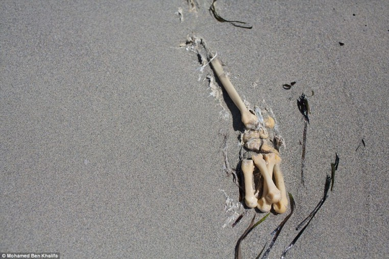 2B5F7C0D00000578-3198872-Buried_The_migrants_bones_poke_out_from_under_the_sand_after_the-a-1_1439797390678
