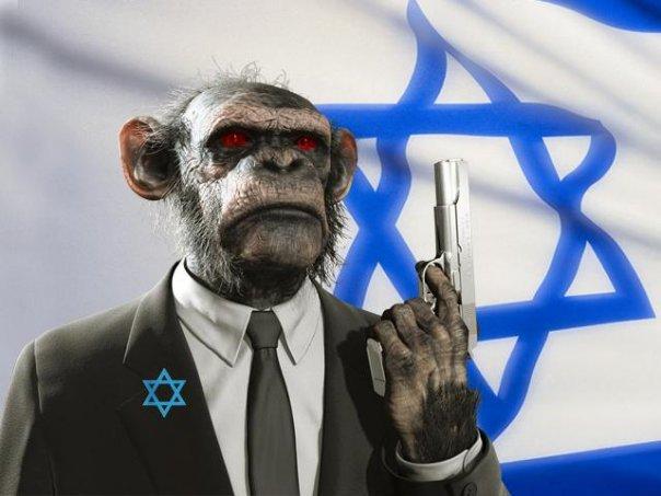 monkey-israel
