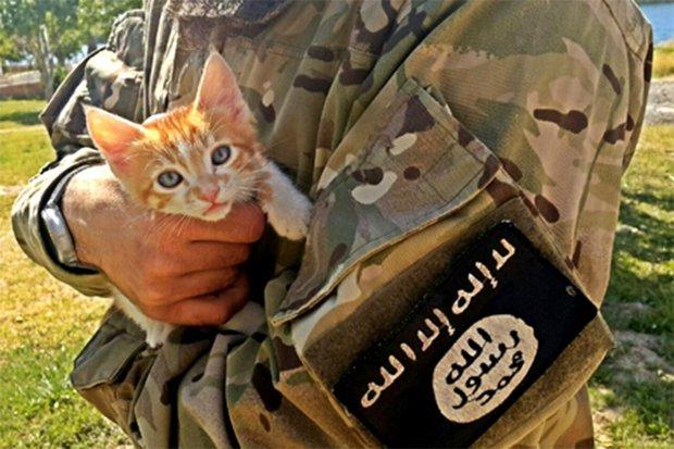 ISIS issue fatwa against CATS. credit: Israfil Yilmaz/Tumblr