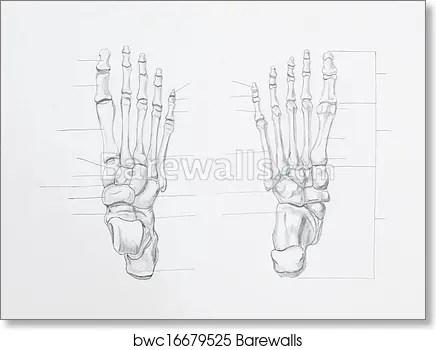 blank foot diagram humbucker pickup wiring art all data print of detail bones pencil drawing on white paper